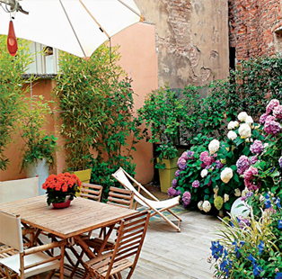 Create a green oasis in your home